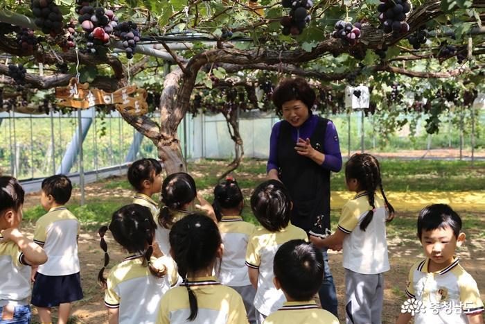 [코로나19 클린사업장 탐방] 천송이 포도나무 자랑하는 '장수포도농원' 4