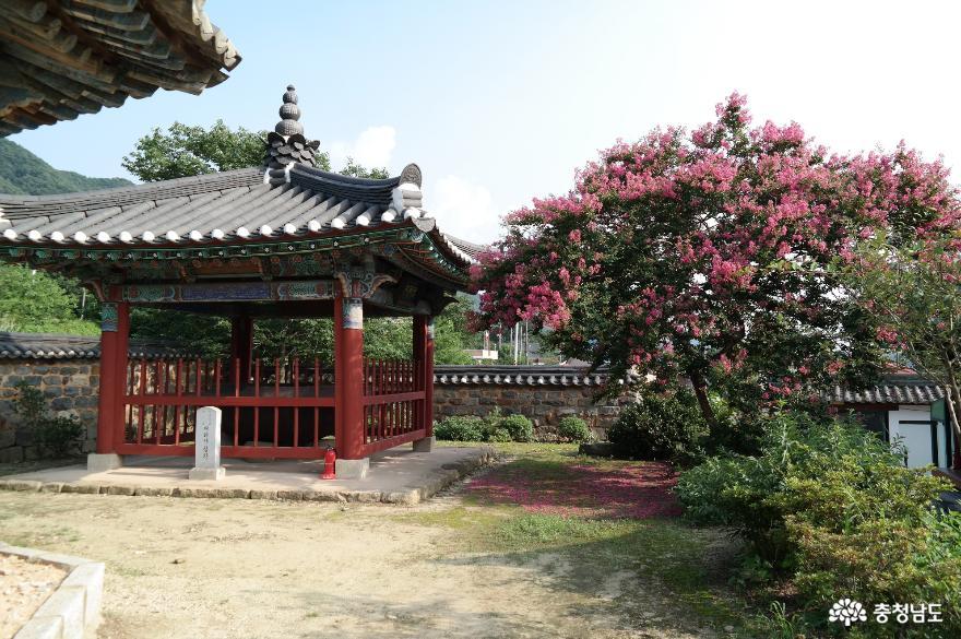 논산 천호산 개태사 철확과 배롱나무