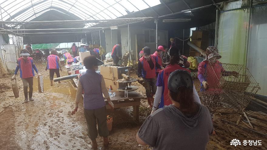 천안 농업인학습단체, 집중호우 피해 시설농가 복구 지원