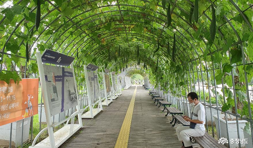 독립기념관 조롱박 터널.