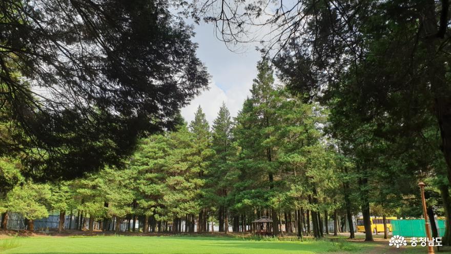 화백나무숲이 좋은 공주대학교