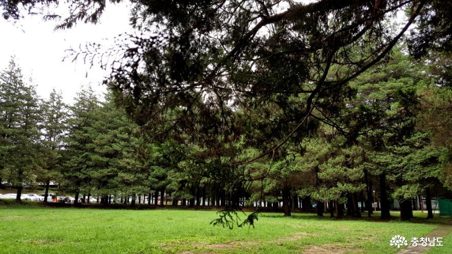 화백나무 숲