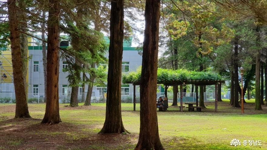 공주대학교 화백나무 숲