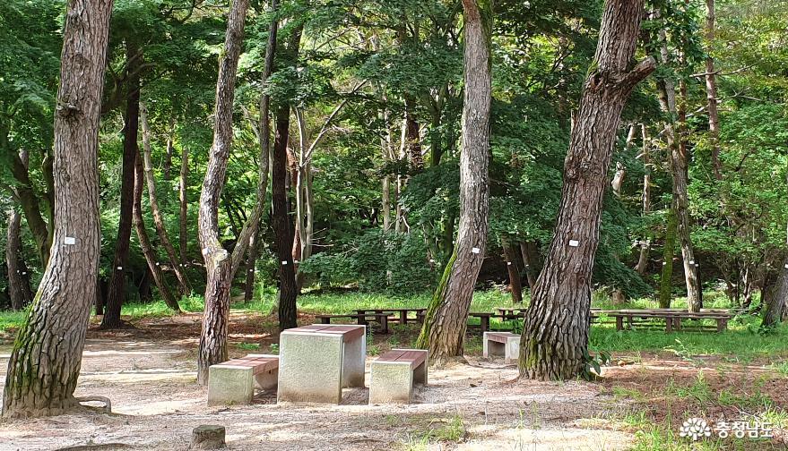 부소산성 산책로에는 소나무 숲 휴식터가 곳곳에 마련돼 있다.