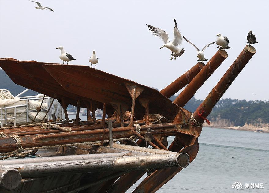 올 가을에도 충남 서해안 전어 대박 화이팅 3