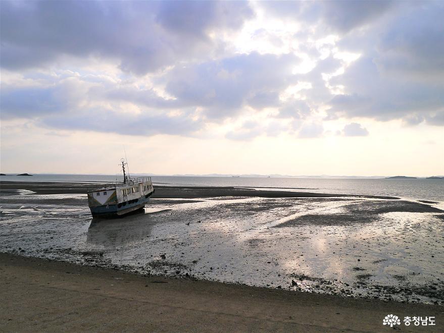 올 가을에도 충남 서해안 전어 대박 화이팅 4