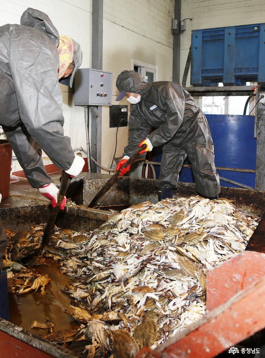 태안산 폐수산물로 만든 친환경 액비, 중국 수출길 올랐다!