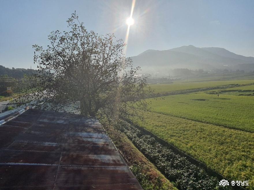 힘든 시기에도 어김없이 다가온 추석, 풍요로운 시골 풍경
