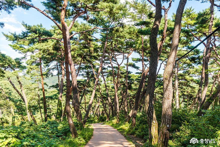 충남 걷기 좋은 길 아산 천년의 숲길과 봉곡사