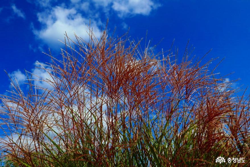 아산 영인산수목원