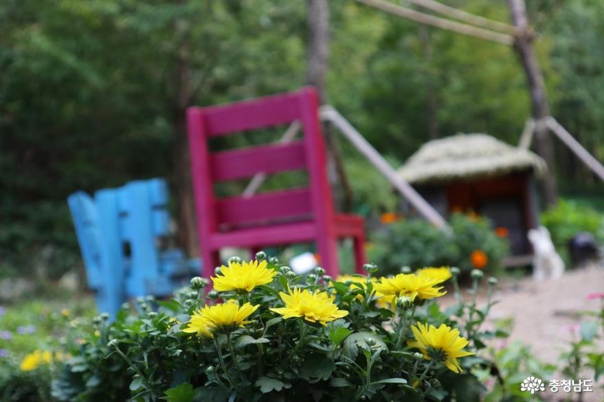 피어나라 청춘, 꽃길만 걷자! 사진