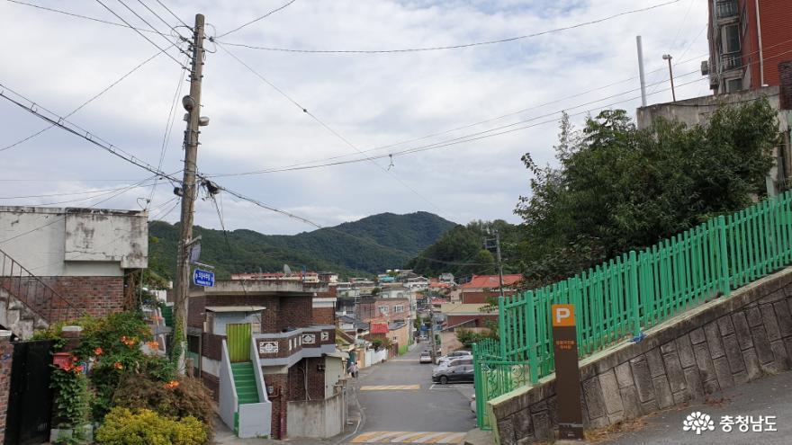 옥룡동 오동나무 길