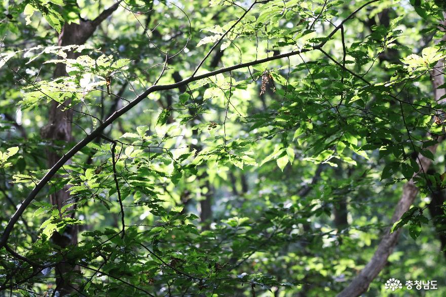 청명한 가을, 언택트 산행지 아산 고용산 사진