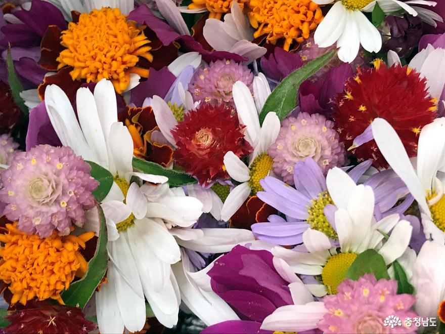 꽃처럼 예쁘고 아름다운 날