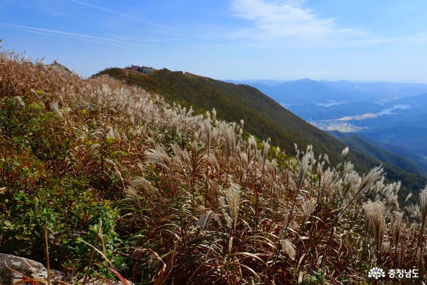가을엔 노을과 억새가 아름다운 오서산이지! 사진