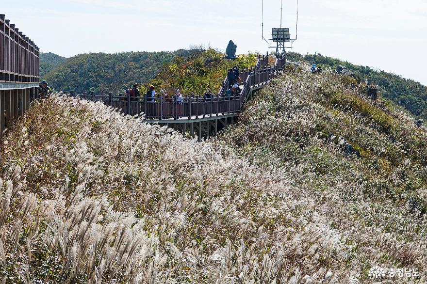 은빛 물든 홍성 오서산, 가을정취 폴폴(fall fall)