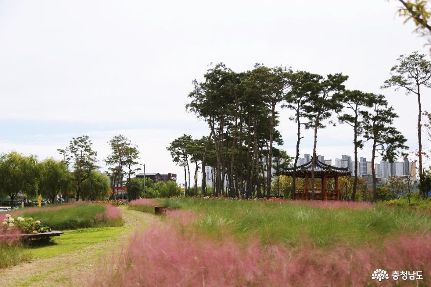 천안 핑크뮬리 명소 세 곳, 인생샷 찍으러 가을나들이