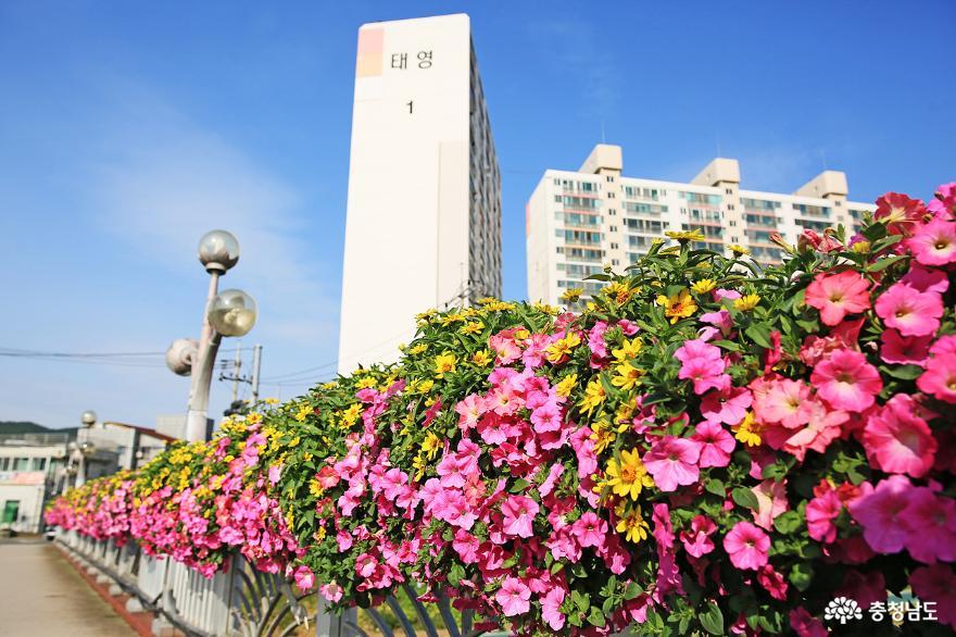 [사진보도] 보령시, 도심지에 코로나블루 극복 꽃다리 설치