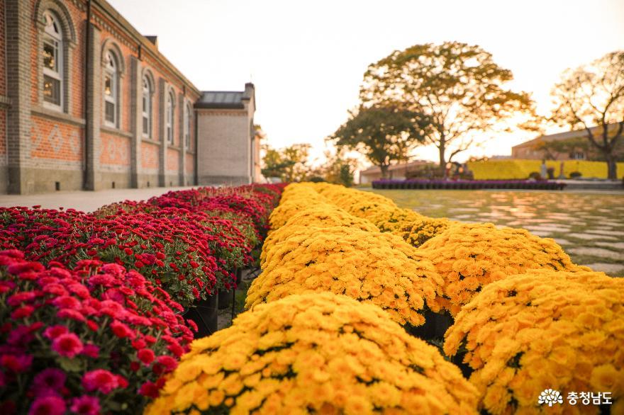 노란국화, 빨간국화와 조화를 이루는 건물