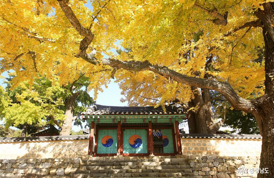 서산향교 은행나무와 팔봉산 단풍등산로
