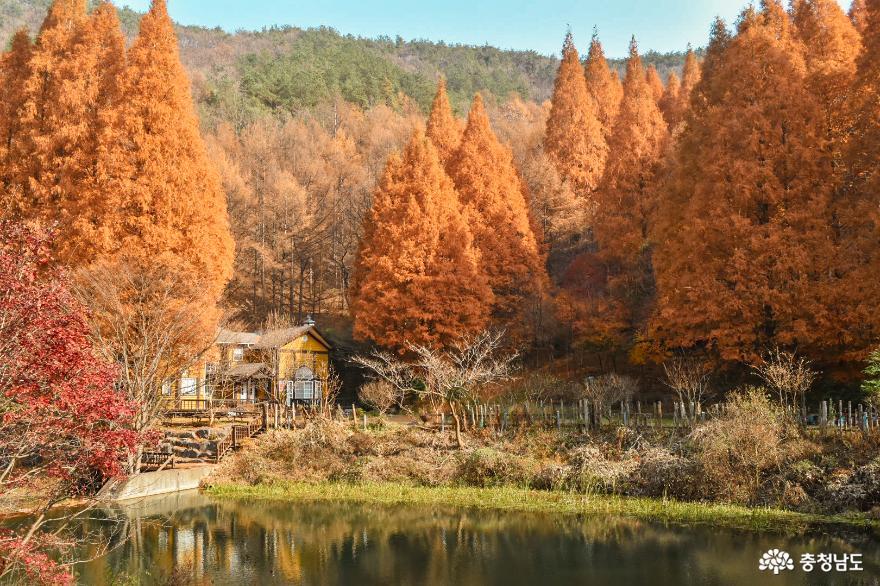 가을이 곱게 물든 논산 언택트 여행지, 온빛자연휴양림