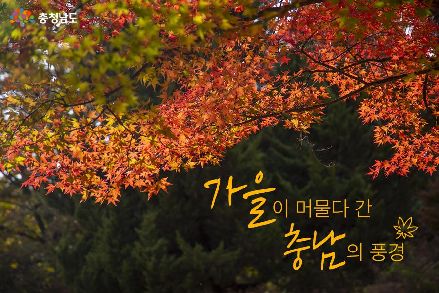 가을이 머물다 간 충남의 풍경