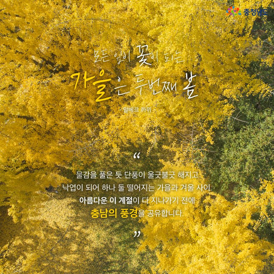 낙엽이 되어 하나둘 떨어지는 가을과 겨울 사이. 충남의 풍경