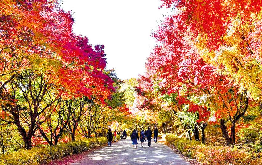 독립기념관 '단풍나무숲길'을 걷다