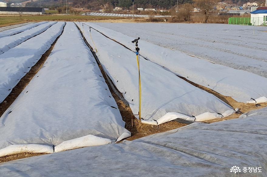 서산시, 겨울철 맞이 농작물 월동준비 철저 당부