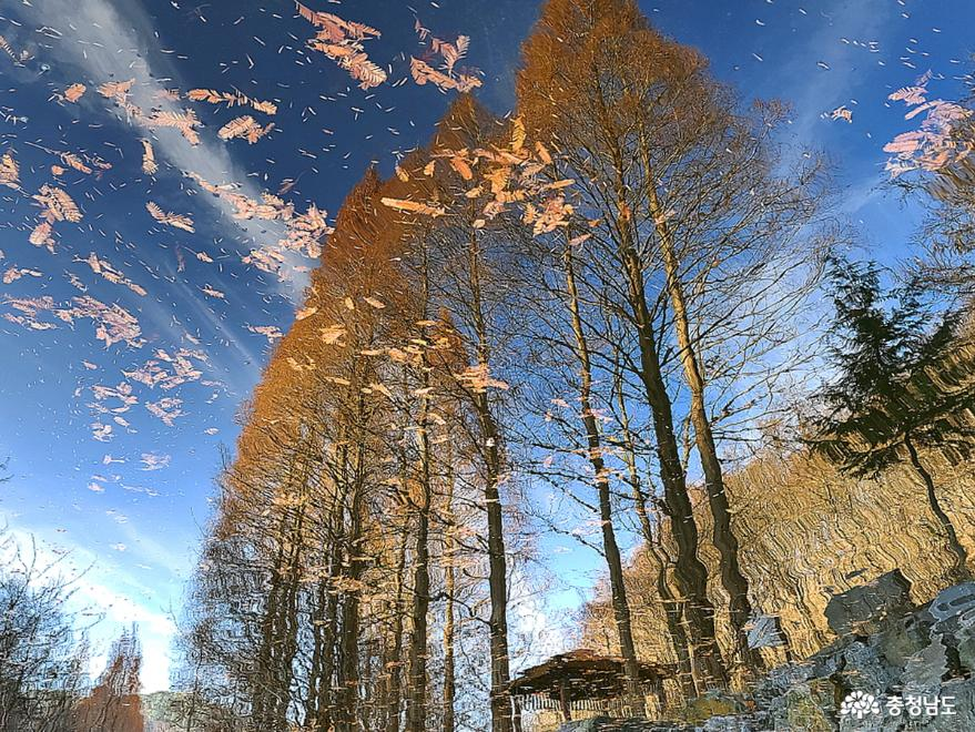 온빛자연휴양림에서 스위스 숲속 분위기를 즐겨보자