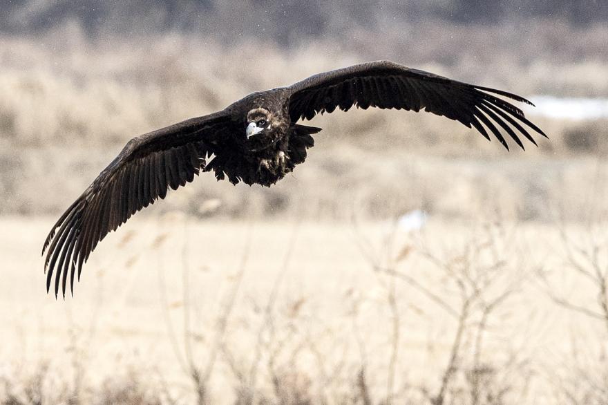 생태관광의 메카, 국내 최대 철새도래지 천수만 독수리