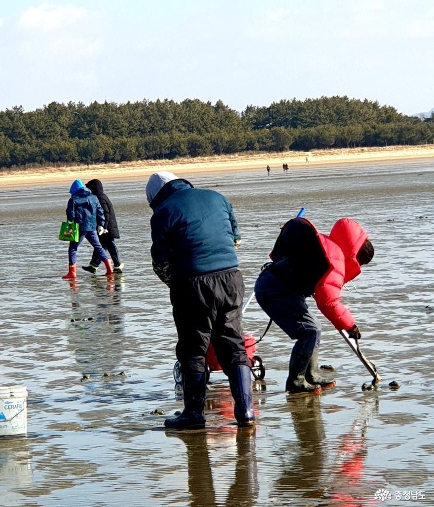 영하 추위에도'바글바글'… 몽산포해변에 몰린 해루질객