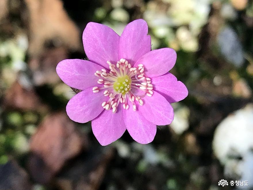 봄꽃들의 속삭임을 노래하다
