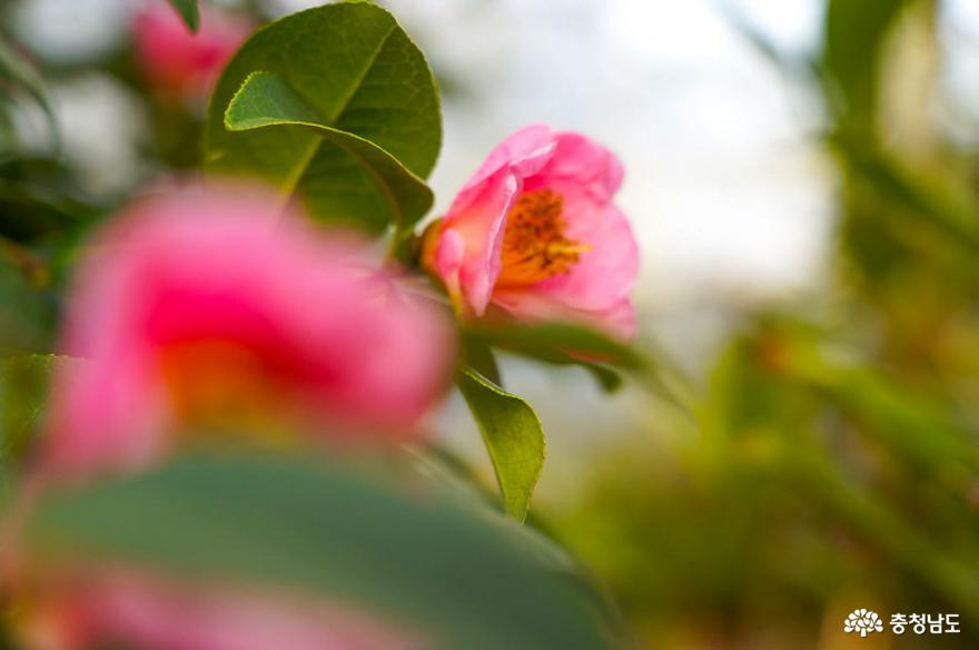 태안 천리포수목원은 봄꽃 향연