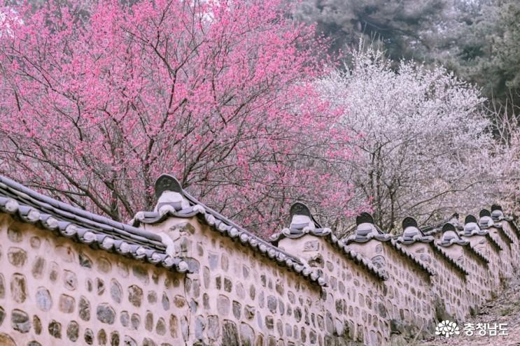 봄꽃 가득한 종학당 산책