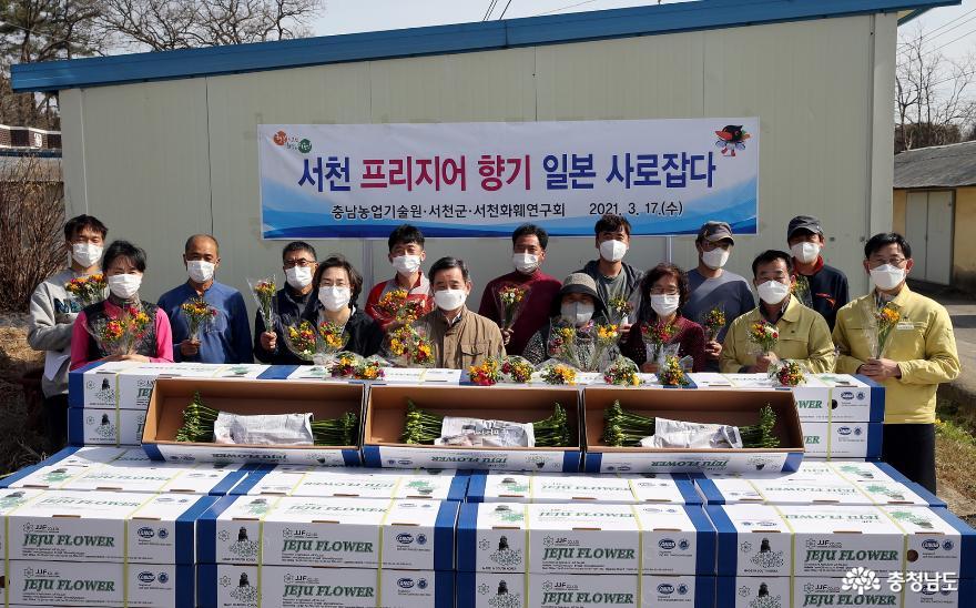 서천 프리지어 향기 일본을 사로잡다