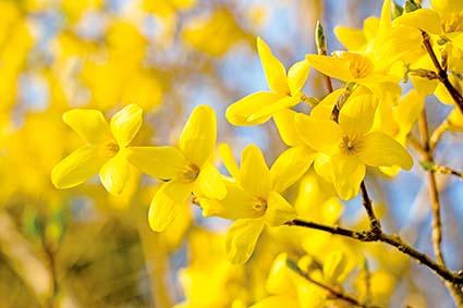봄날, 햇고 푸르다