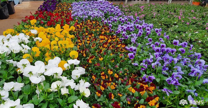 '봄' '봄' '봄' 꽃과 나무로 '봄'을 '봄'