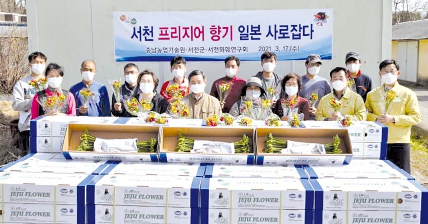 서천 프리지어·청양 구기자 일본 수출길 올랐다