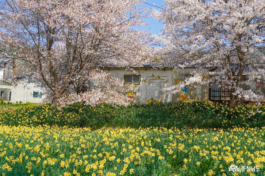 홍성에 봄이 온다면, 거북이마을