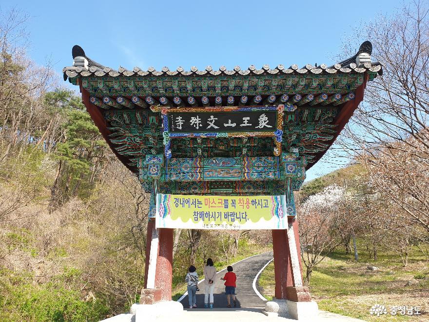 [여행]왕벚꽃으로 유명한 서산 상왕산 문수사에서 부처님 진신사리를 만나세요!