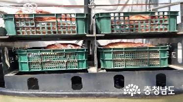 '벼 키다리병 예방'…염수선, 온탕소독 필수
