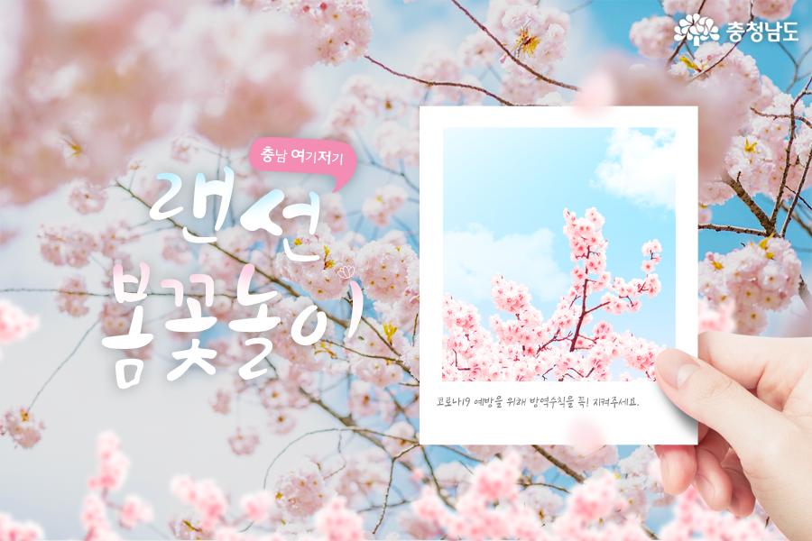 충남 봄꽃 풍경