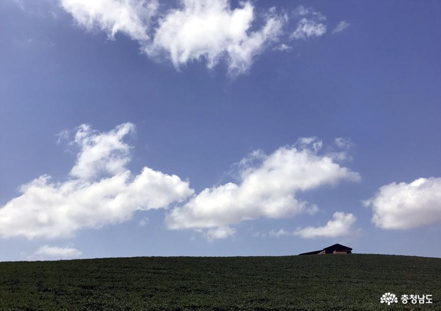 진사님들 출사지로 유명해져 명소가 된 천북 초원