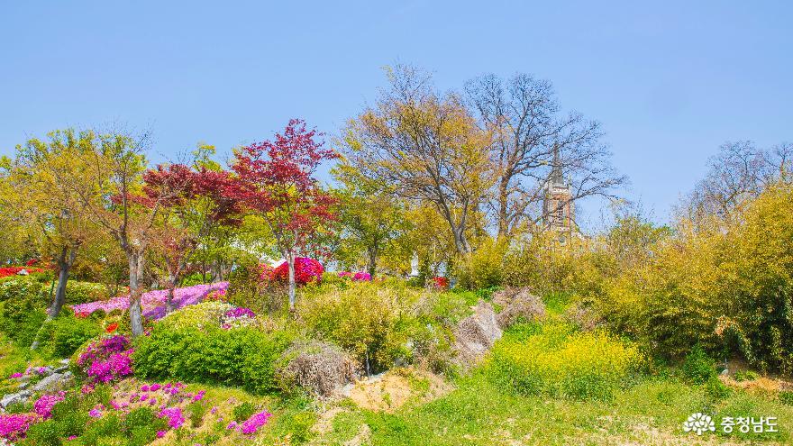 아산 '공세리 성당의 봄' 풍경