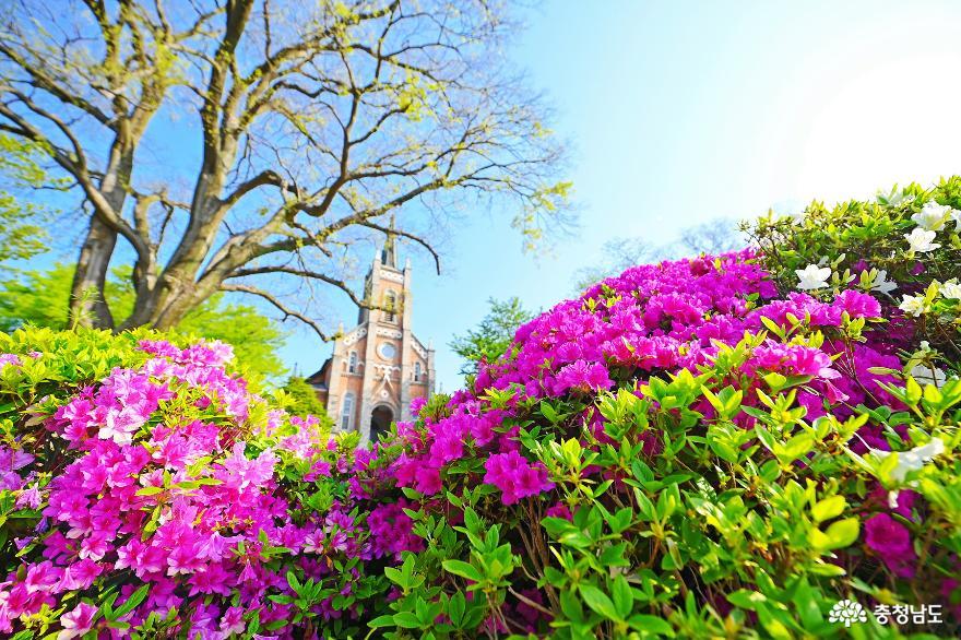 봄꽃 가득 보고 싶은 풍경 아름다운 촬영 명소 공세리성당