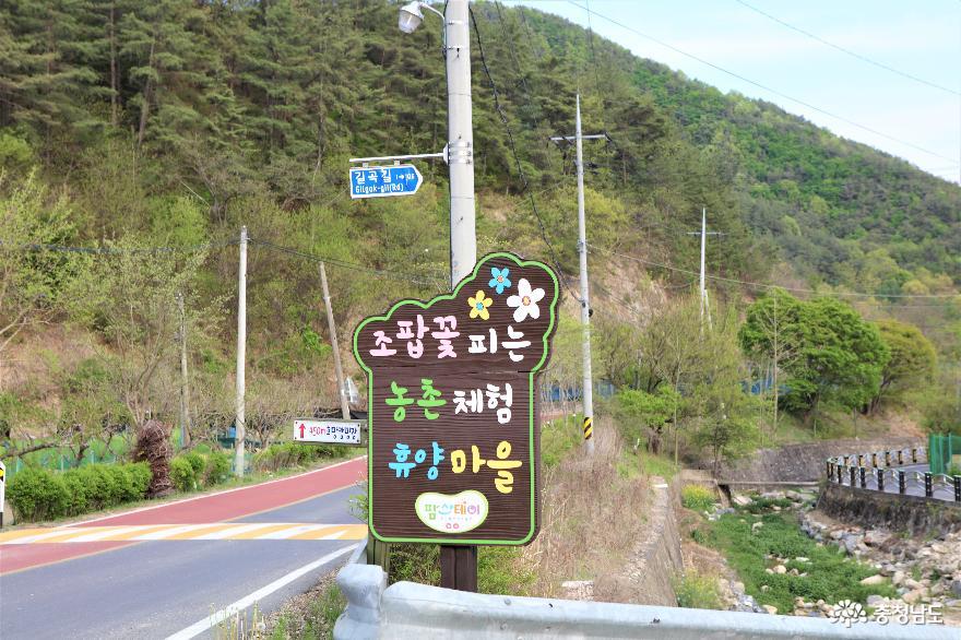 조팝꽃 피는 마을과 작은 음악회