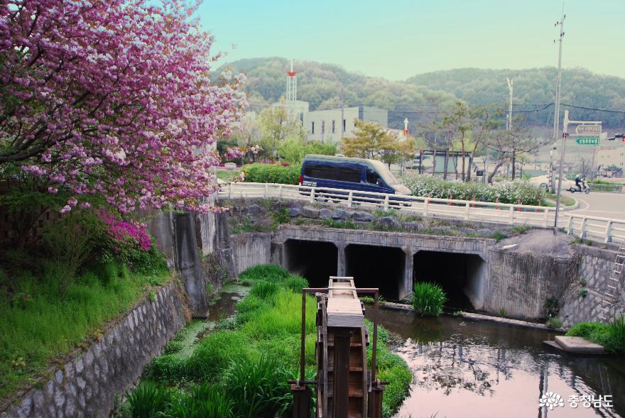 신록으로 새 단장한 '금학생태공원'