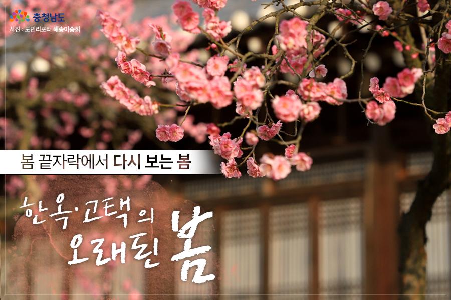 한옥·고택의 오래된 봄