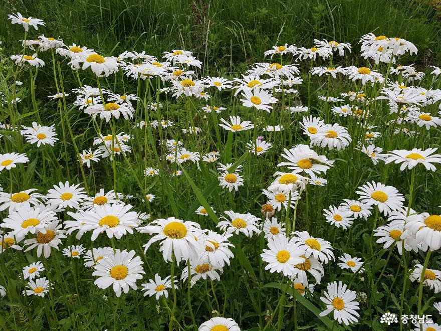 천안천과 원성천에서 만난 향기로운 꽃들